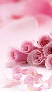 wallpaper with pink roses and petals for iphone 6
