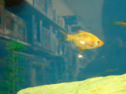 petco freshwater fish. Plain Petco One Recent Evening I Happened To Wander Into A Petco It Was Very  Different Than The Pet Stores Of My Childhood Instead Wideeyed Children Gazing At  Inside Petco Freshwater Fish O