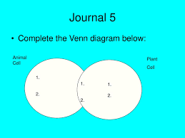 Venn Diagram For Osmosis And Diffusion The Cell Membrane Diffusion And Osmosis Ppt Download