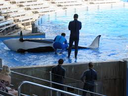 SeaWorld Continues to Sink in 2nd Quarter Earnings Report | Ocean ...