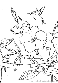 Small Picture Printable Hummingbird Coloring Pages At itgodme