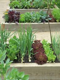 Small Picture Raised Bed Vegetable Garden Design With Small Backyard Weddings On