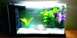 betta fish tank decorations decor water heater bowl my do need a mini diy