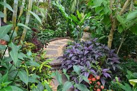 Small Picture Tropical Garden Plan Design planted with Various Kind of Tropical