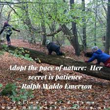 Forest Quotes Adorable Quotes Archives Page 488 Of 488 Mamma's School