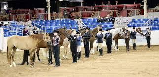 Horse Showmanship Wikipedia