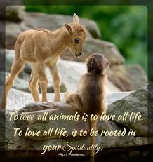 A Love For Animals Quotes For Spiritually Minded People Cool Love Animal Quotes