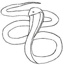snake head drawings in pencil. Unique Drawings How To Draw Snake Step 4 On Snake Head Drawings In Pencil
