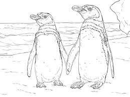 Small Picture King Penguin With Bow Tie Coloring Page Animal 50 Best Images