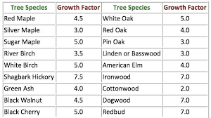 Japanese Maple Growth Chart Growth Rate Of Maple Trees Lostcontrol