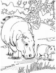 Realistic Hippopotamus Hippo Coloring Book Page Free Coloring Book