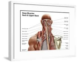 This curve, called lordosis, helps to: Human Anatomy Showing Deep Muscles In The Neck And Upper Back Poster Allposters Com