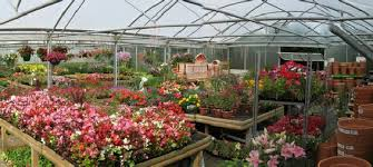 Image result for nursery plants images