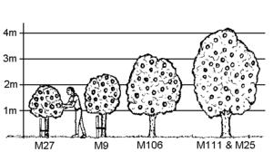 Fruit Tree Propagation Wikipedia