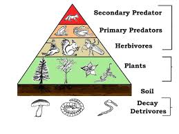 importance of plants in our life their role on the earth importanceof plants