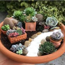 fairy gardens ideas. It Is Possible To Also Propagate Your Very Own Succulent Pups From Cuttings. Important Contemplate Where You Want Place Fairy Garden. Gardens Ideas