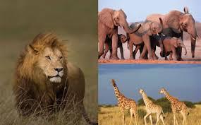 african wildlife tub
