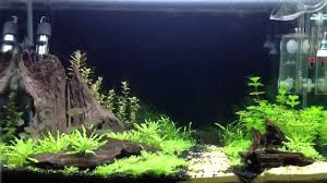 Funny Fish Tank Decorations 30 Gallon Freshwater Aquarium Setup Aquarium Ideas Pinterest