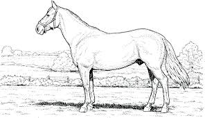 Horse Head Coloring Pages To Print Horse Head Coloring Pages