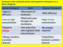 Endocytosis Vs Exocytosis Venn Diagram Active Transportbothpassive Transport Compare And Contrast Active