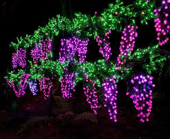 Bellevue Botanical Garden Holiday Lights Garden Dlights Bellevue Wa Trover