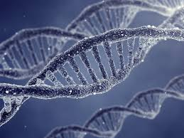 Image result for dna images