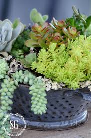 HOW TO PLANT SUCCULENTS BEAUTIFULLY
