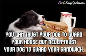 Funny Dog Quotes Delectable Dog Quotes Cool Funny Quotes
