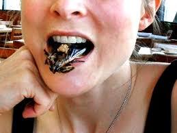 Good Grub 13 Edible Bugs Photo 1 Pictures Cbs News