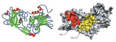 tetanus toxin s tr june 2002