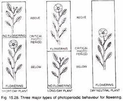 essay on plants three major types of photoperiodic behaviour for flowering