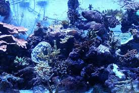 how aquarium lighting affects c health