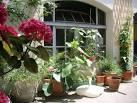 Plantes mditerranennes pour balcon et jardin - Gerbeaud