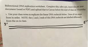 Use Your Class Notes To Replicate The Linear DNA M... | Chegg.com