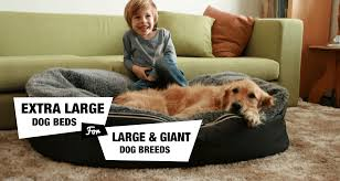 6 Extra Dog Beds For XL XXL Dog Breeds Reviewed