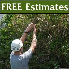 tree care specialists leesport pa terryu0027s experts terrys tree service75
