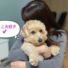 Image result for 犬 Goldendoodle 抱きしめる