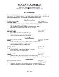 Resume Template Internship Fake Example Samples For Engineering