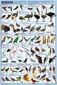 Bird Orders Poster By Feenixx Educational
