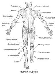 Small Picture FREE Human Anatomy Printables Science Resources for