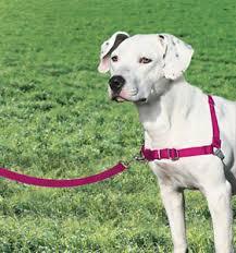 Details About Premier Petsafe Easy Walk Harness Stop Dogs Pulling Medium Size