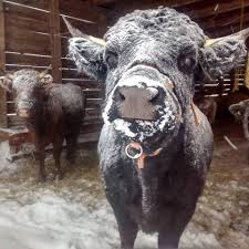<b>Snow Glade</b> Farm - Home | Facebook