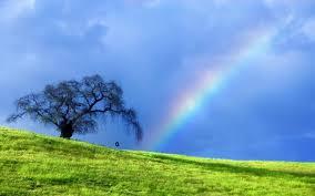 nature rainbow hd wallpaper