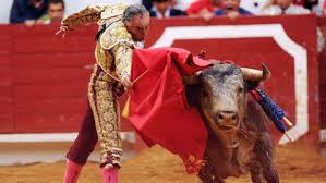 bull fighting injuries. Simple Fighting Bullfighting In Mexico Mexican Bullfighter Left Tetraplegic Ring  Succumbs To His Injuries  In English EL PAS On Bull Fighting Injuries