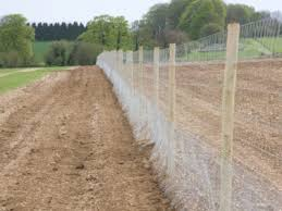 tips on building a deer proof fence