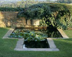 great plants for small backyard ponds