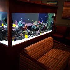 office aquariums. Doctor S Office Fish Tank Designs Aquariums