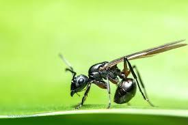 Ants In Bathroom Best Design Inspiration