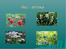 Россия великая лесная держава презентация к уроку Географии Лес аптека