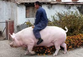 Вспышка африканской чумы свиней зафиксирована на Львовщине, - ОГА - Цензор.НЕТ 7828